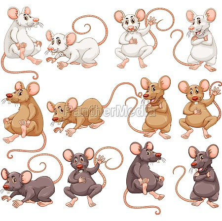 mouse with different fur color