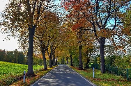 beautiful autumn tree with orange and