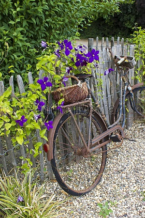 old vintage bicycle with basket on