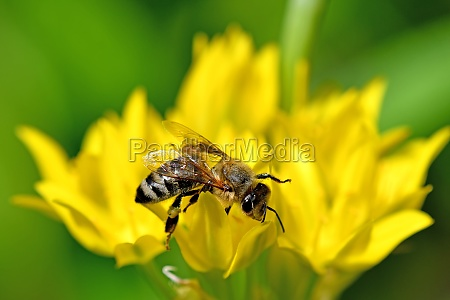 bee on yellow flower of magical
