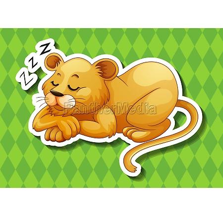 lion cub sleeping alone