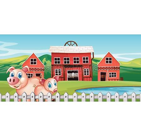 pig at rural farm