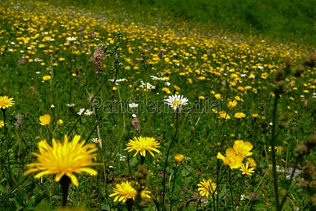 yellow and white flowers on a