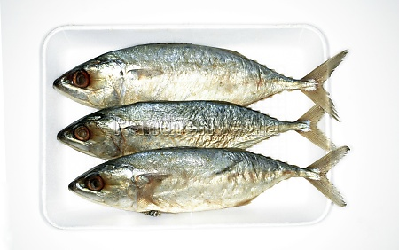 overhead view of sardines on tray