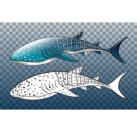whale shark with its doodle on