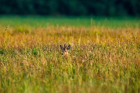 a deer in the wildlife