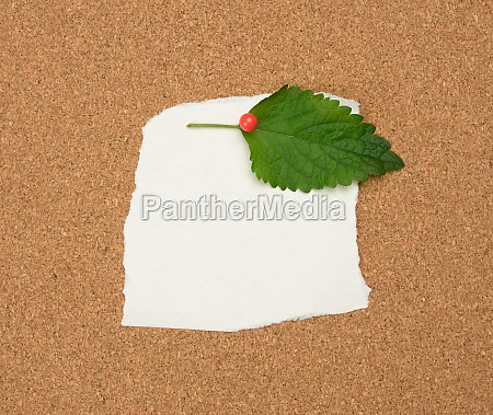 torn white blank white sheet of