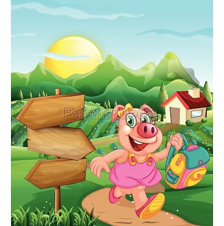 pig at rural house