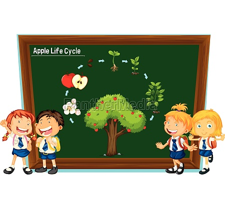students and diagram of apple life