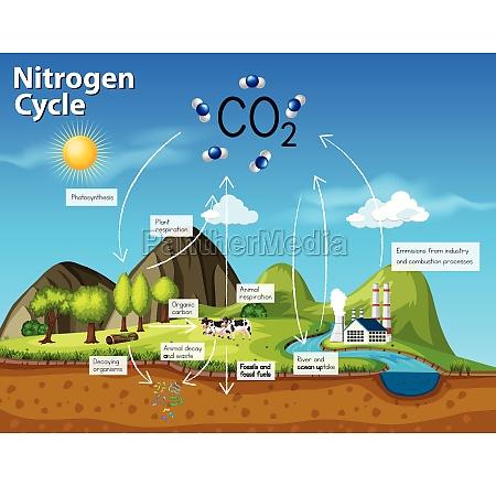 science nitrogen cycle co2