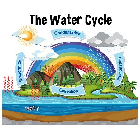 diagram showing water cycle with rainfall