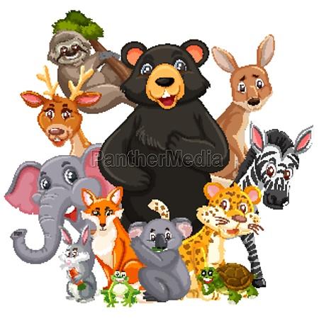 different types of wild animals on