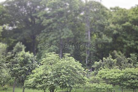view landscape tree plant in public