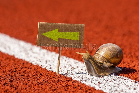 snail looking at sign with direction