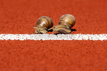 snails run to the finish line