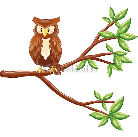 cute owl standing on branch