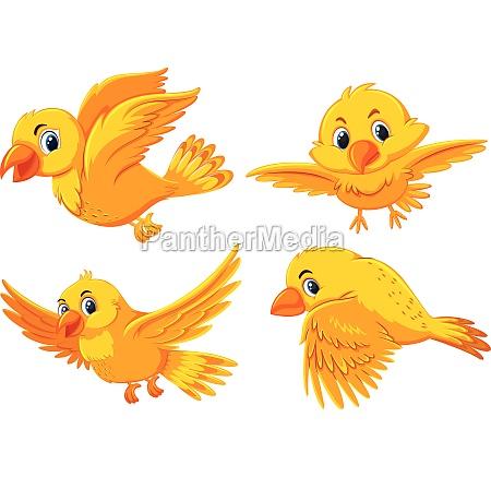 set of cute yellow birds
