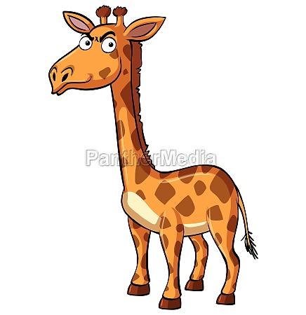 wild giraffe with serious face
