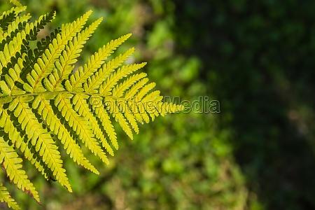 shining, leaf, from, a, fern, in - 30557543