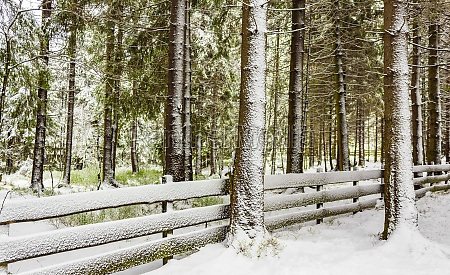 snowed in icy fir trees fence