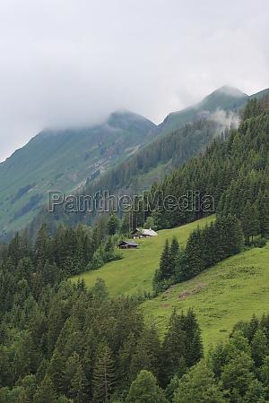 green landscape in the swiss alps