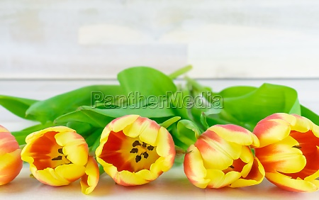 red and yellow tulips in a