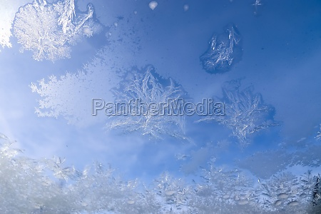 beautiful ice flowers at a window