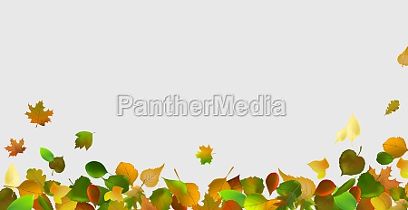 realistic autumn leaves on a light