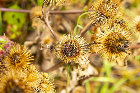 field dried spiny plants in the