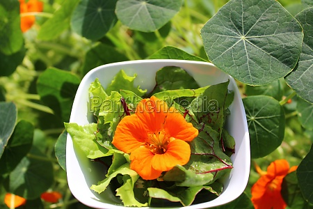 salad with a indian cress blossom