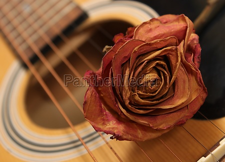 classic acoustic guitar with dried rose