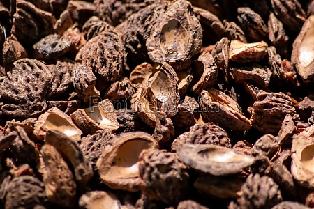 organic background with shredded peach seeds
