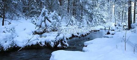 wintery trees along a small creek