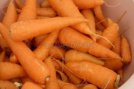 fresh and organic carrot close up