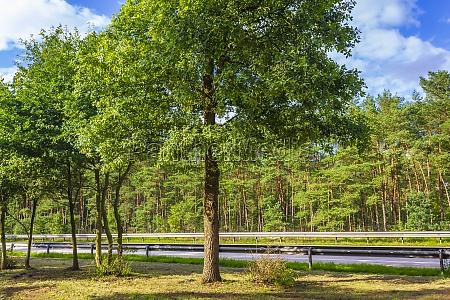 nature and landscape on the highway