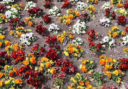 beautiful flowers in a european garden