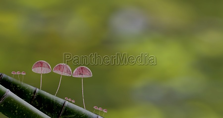 3d rendering mushroom wallpaper with nice