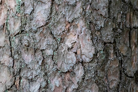 tree bark with fine natural structures