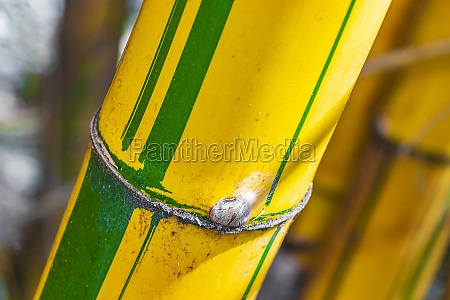 green yellow bamboo trees tropical forest