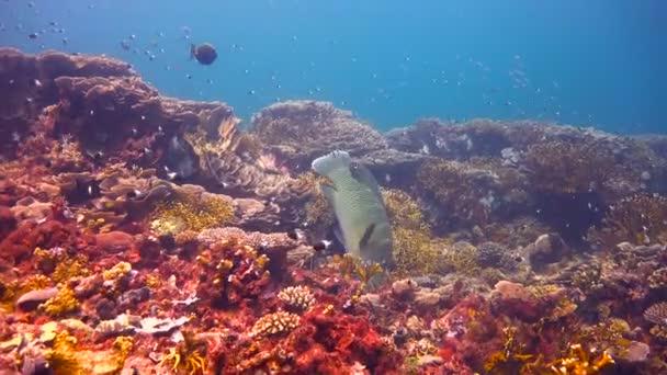 water sea tropical fish ocean underwater