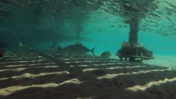 small nature water sea massive animals