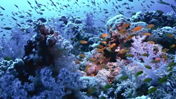 water fish underwater dive saltwater reef