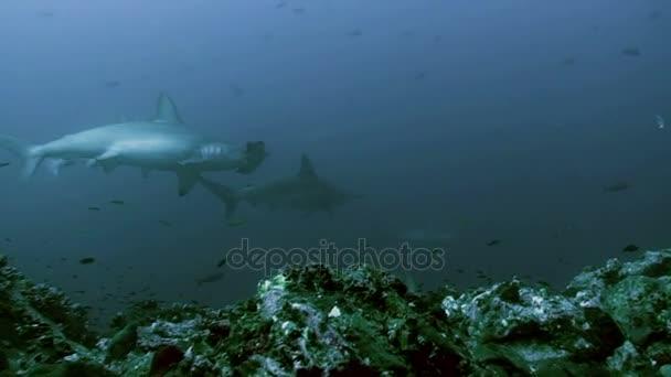 group water sea wildlife fish marine