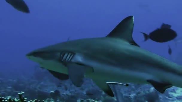 sea fish ocean underwater dive saltwater