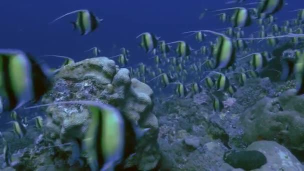 colorful ocean adventure exploration saltwater reef