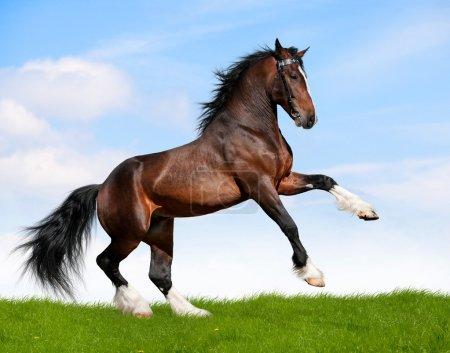 blue, sky, grass, beauty, freedom, outdoors - B9652327