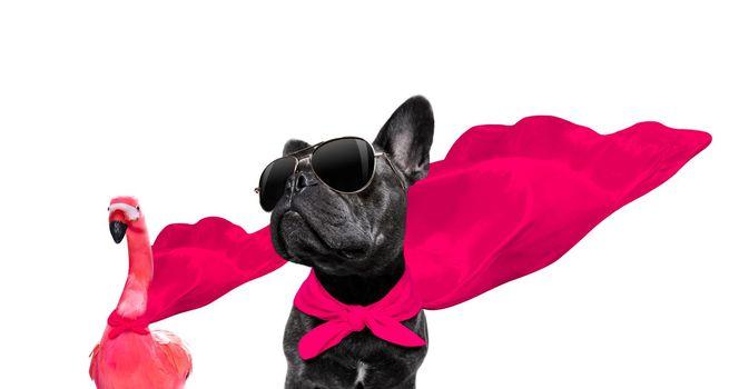 cool animal background banner bulldog canine