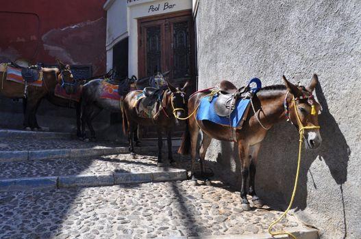 donkeys santorini greece downhill mules in