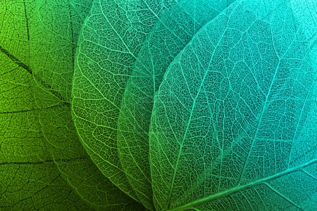 green color image background element macro