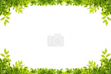 Media-id B20063615